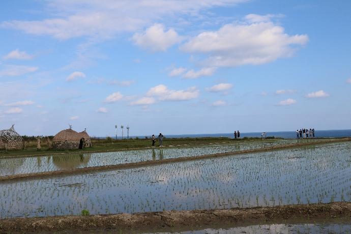 中央研究院「臺灣農村社會文化調查計畫」進行相關田野調查與行政人員徵才